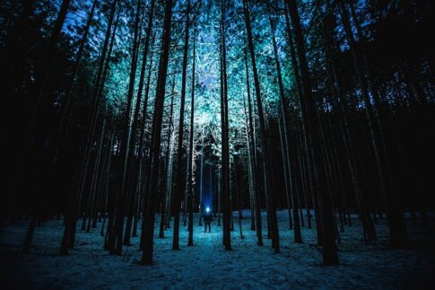 Can a flashlight blind you, flashlight in a forest